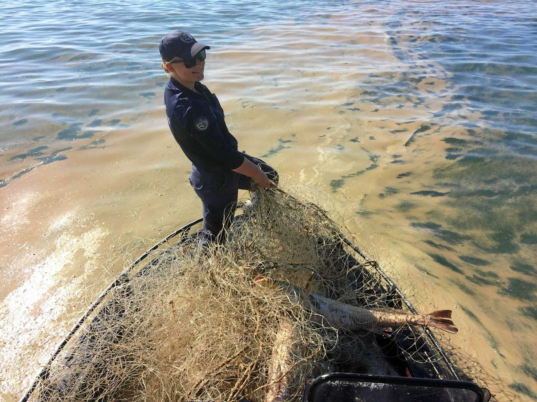 A Queensland Boating and Fishing Patrol officer reigns in an illegal fishing net found in Keppel Bay's net free zone this morning.